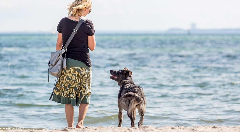 Hundeschule Pirate-Dogs Lübeck - Bildergalerie Kurse
