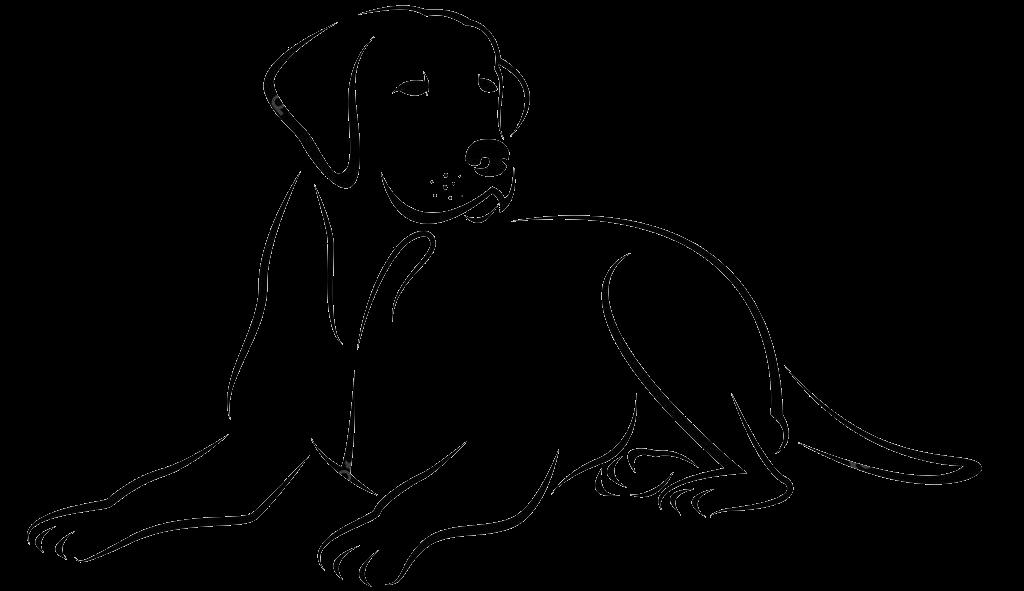 Zeichnung Liegender Hund