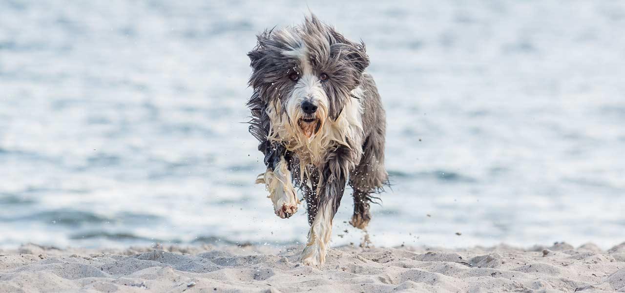 laufender Hund am Ostseestrand
